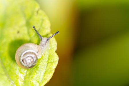 palatable: snail Stock Photo