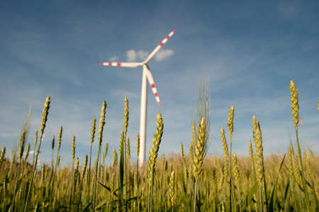 windpower: Wind power plant in the background of a grain field, wind power station in a cornfield. Stock Photo