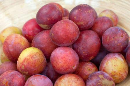 prunus: Greengages, plums in a bowl, Prunus domestica ssp. italica, Stock Photo