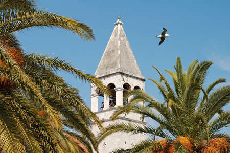 reisen: M?we ?ber Kirchturm in Trogir, Kroatien, Adria