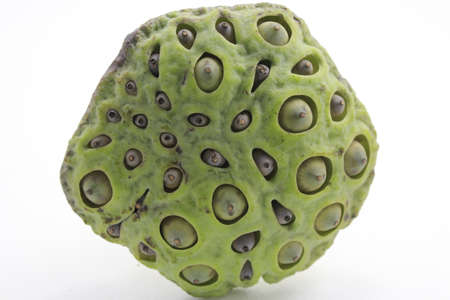 seedpod: Lotus seed pod