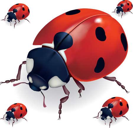 lady bug Illustration