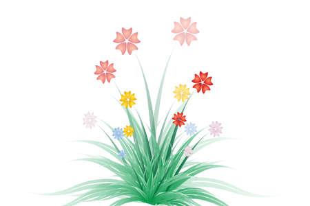 tropical flower: tropical flower,blossom