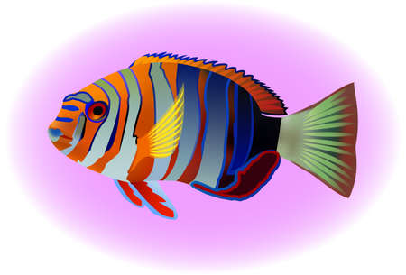 tropical: tropical fish, vector illustration