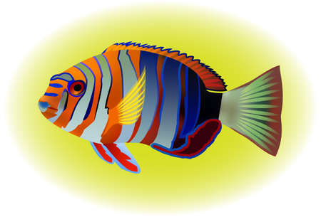 vis: tropical fish, vector illustration