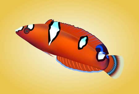 tropical fish isolated: Tropical fish isolated, vector illustration Illustration