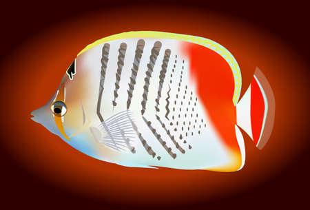 tropical: tropical fish