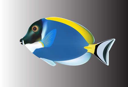 tropical fish: Tropical fish. Vector