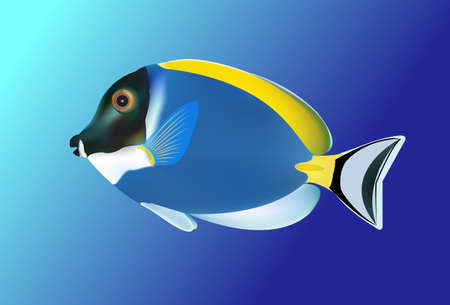 tropical: Tropical fish. Vector