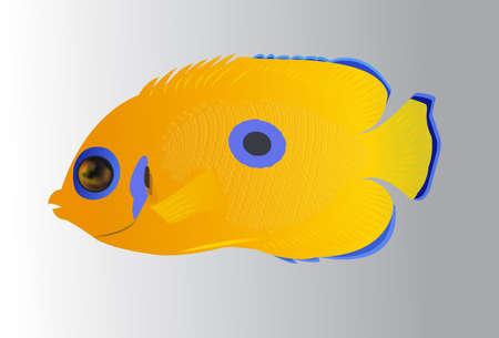 blue tang fish: tropical fish
