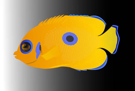 tropical: yellow tropical fish