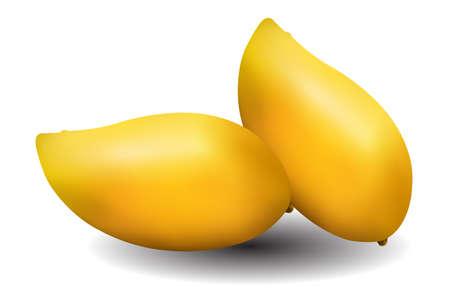 mangoes: yellow mangoes on white background