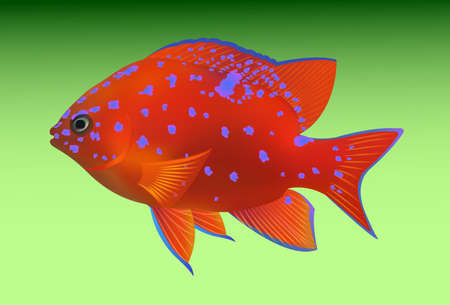 plunging: tropical fish on green background