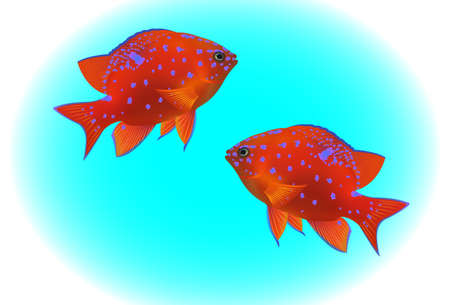 plunging: tropical fishes on blue background Illustration