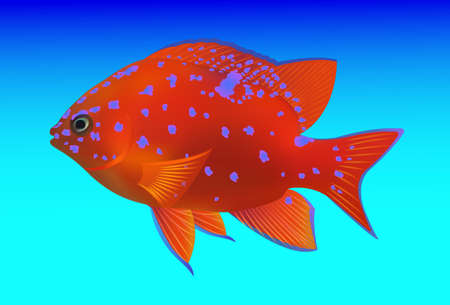 blue fish: tropical fish on blue background