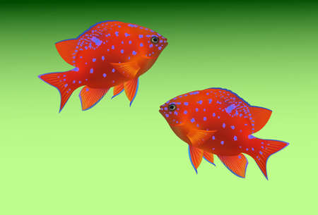 tropical: tropical fishes on green background Illustration