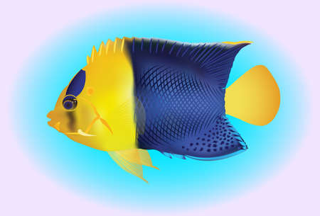 snorkelling: vector illustration of a yellow and blue