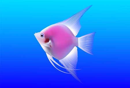 beautiful tropical fish on blue background Illustration