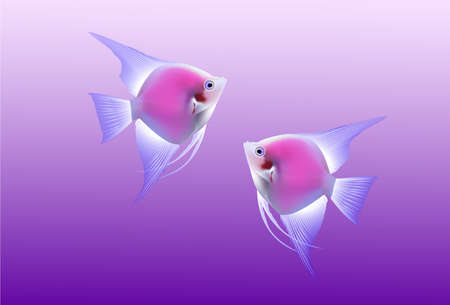 beautiful tropical fishes on purple background