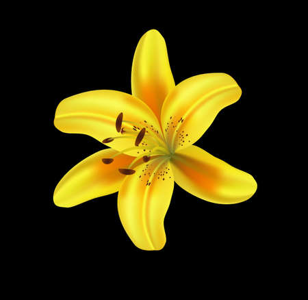 lilly: Beautiful lilly isolated on black background, vector