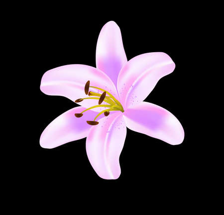 Beautiful lilly isolated on black background, vector
