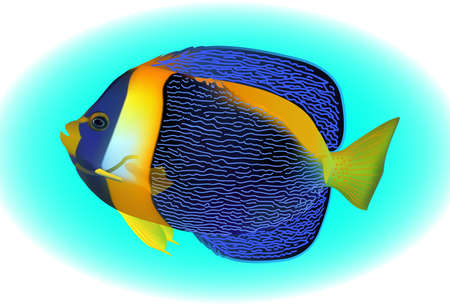 mostly: angel fish, one of mostly colorful coral fishes. Vector illustration. Illustration