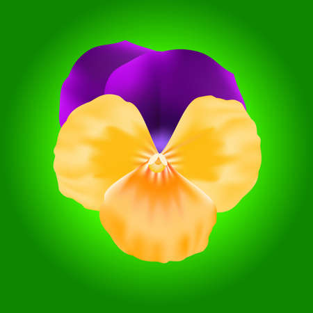 pansy: vector Lavender Pansy and Bud isolated on a green background. Illustration