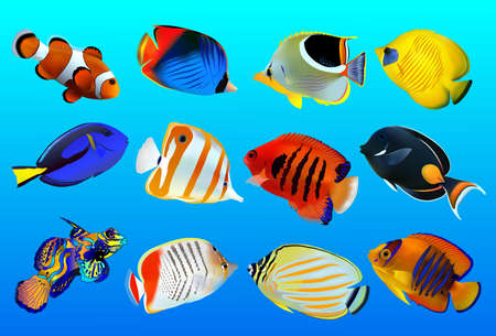 zanclus cornutus: group of fishes on a blue background