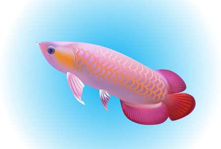 arowana: Arowana fish Illustration