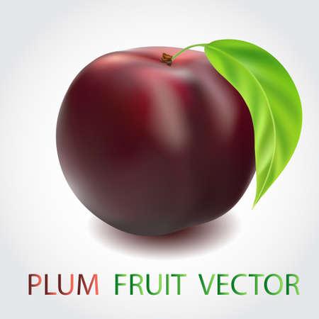 intact: Red plum fruit isolated on white background Illustration