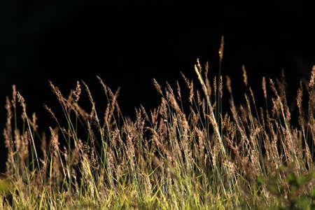 vintage background: vintage nature background