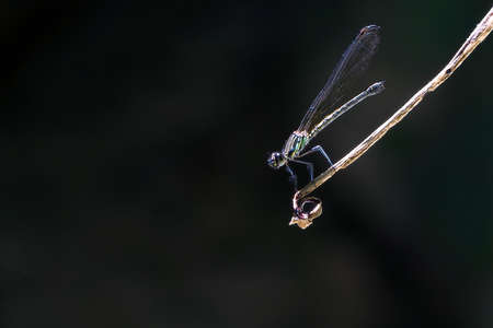 A beautiful dragonfly can be found in Thailand