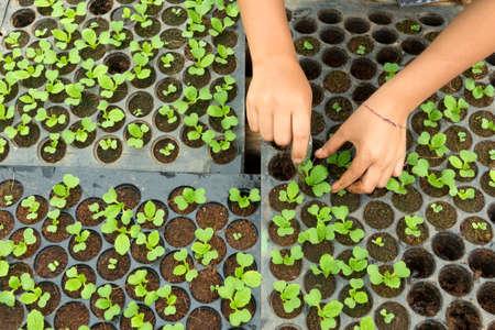 germinación: Primer plano de pequeños plantones en macetas.