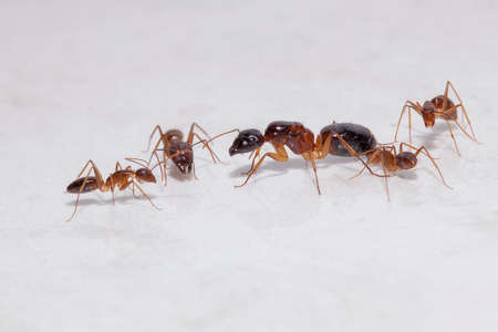 Large queen surrounded by smaller attendants of ant colony