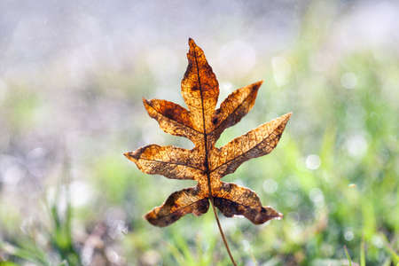 autumn leaves background. selective focus