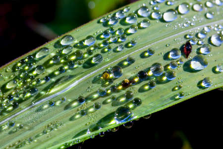 Fresh green grass with dew drops closeup. Nature Background Banco de Imagens