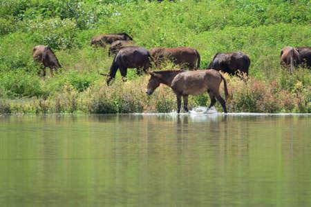 Mule horse in a scenic landscape