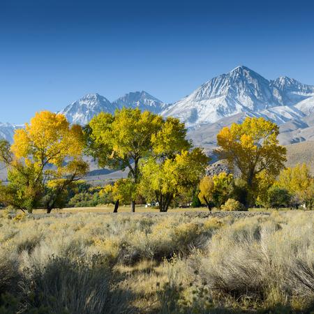 Tree in desert landscape  USA  America mountains