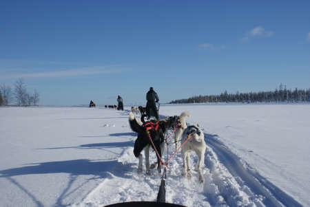 sled dog: Husky Ride