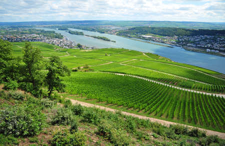overview of vineyard and river of Rhein  photo