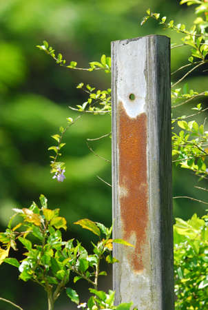 nickle: Rusty metal bar surrounded by plant