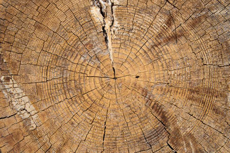 The pattern of tree rings on the end of the log, background.
