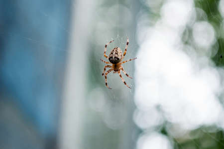 A spider on a web in the garden, back light. Archivio Fotografico - 129091498