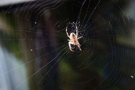 A spider spinning a web in the garden, selective focus.