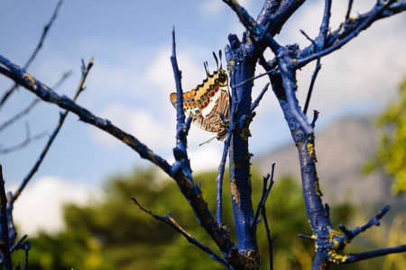 Butterfly on a dry branch in the garden, shallow depth of field.