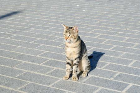Grey tabby cat sitting on the street, Istanbul, Turkey. Banco de Imagens