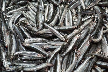 Fresh anchovies at the fish street market, Istanbul, Turkey.