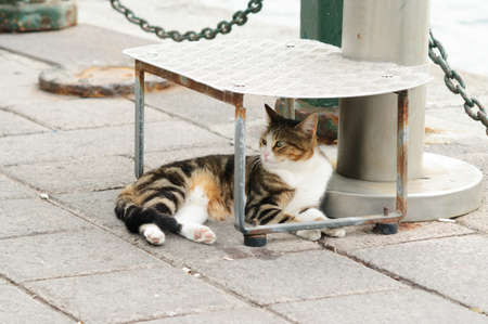 Striped white red cat lying under the step. Banco de Imagens