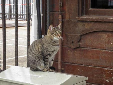 A street grey tabby cat sits on a bollard, Turkey. Banco de Imagens