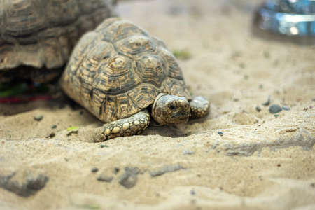 Close up turtle on the sand.